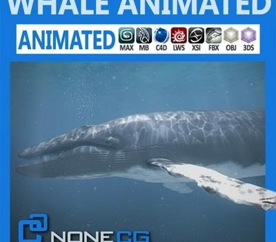 Animated-Whale.jpg