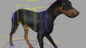doberman-walk-cycle.jpg
