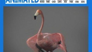 Animated-Flamingo.jpg