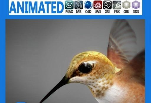 Animated-Hummingbird.jpg