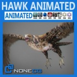 Animated-Hawk.jpg
