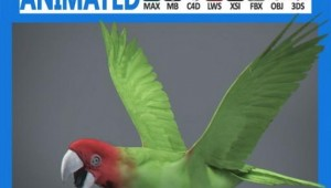 Animated-Wild-Parrot.jpg